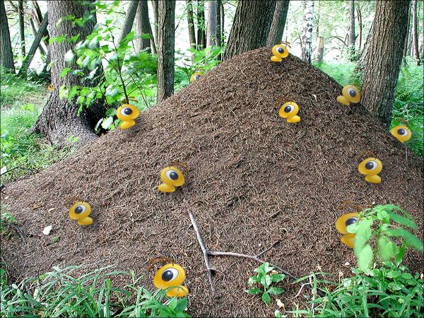 В.: Итак, продолжим.  Что же произошло с империей муравьев в нашем лесу?